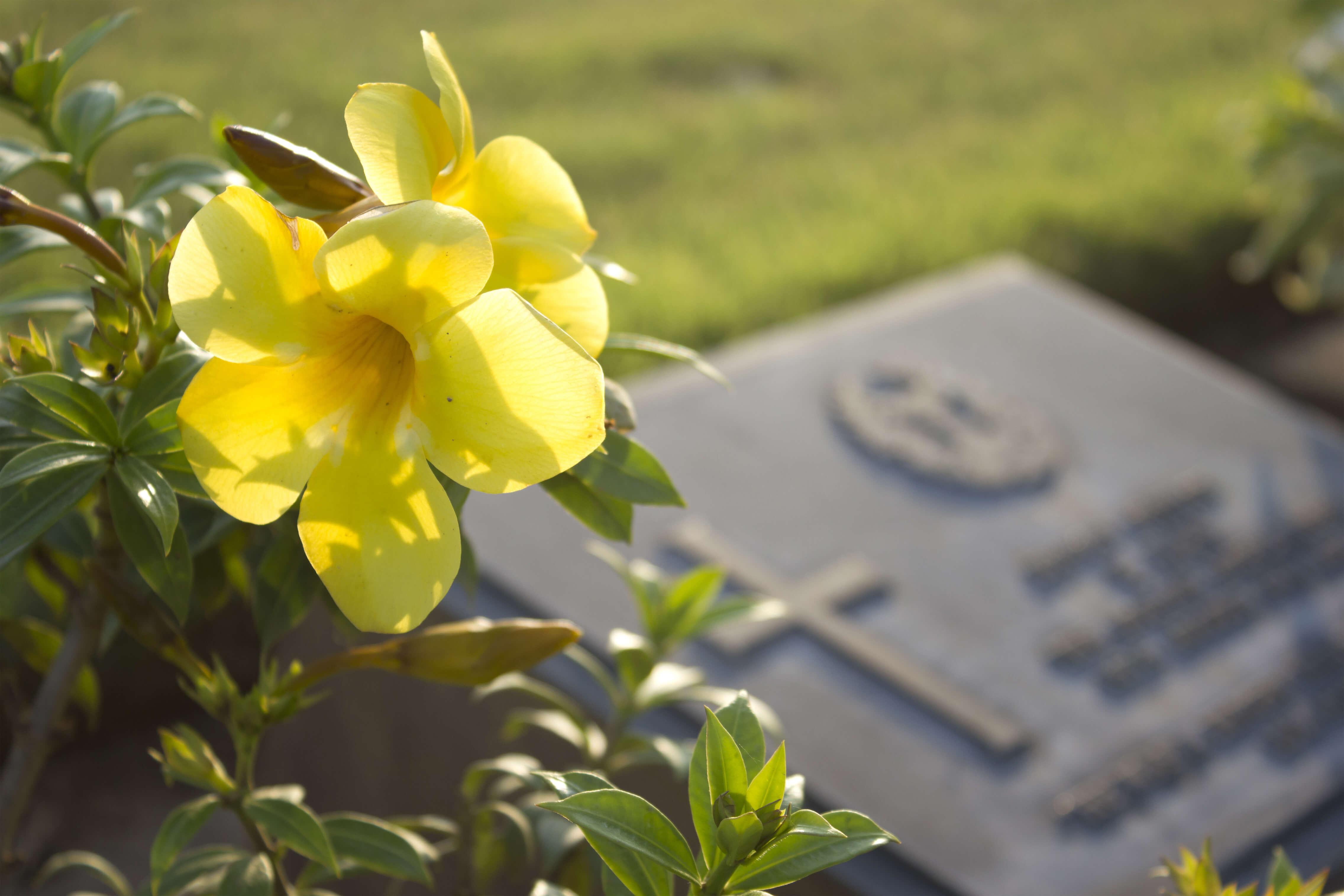 como surgiram os cemitérios